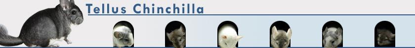 Tellus Chinchilla